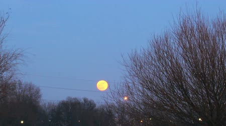 mehtap : Full moon rises in the background of trees at sunset to complete darkness