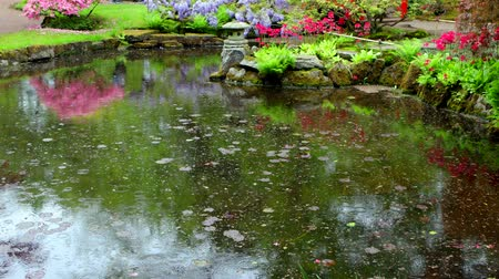Raindrops in the pond of the summer flowering Japanese garden. 4K Footage.