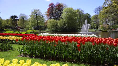HD Footage of Blooming European Garden, Fountain in the park, the Netherlands.