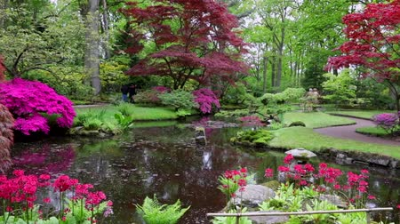 magenta flowers : Traditional Japanese Garden in The Hague. HD Footage. Stock Footage