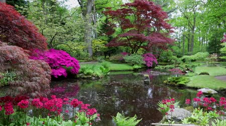 lanterns : Traditional Japanese Garden in The Hague. HD Footage. Stock Footage