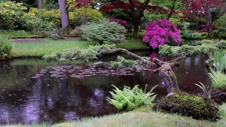 magenta flowers : Traditional Japanese Garden in The Hague. Slow Motion Footage.