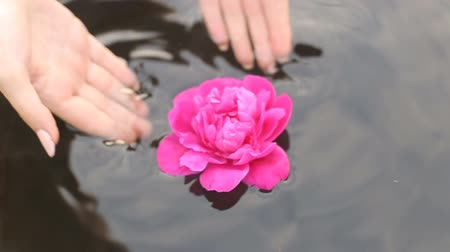 терапия : Beautiful human hands carefully holding flowers floating in the pool.