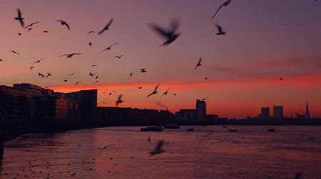 inspiradora : A flock of seagulls with sunset over Thames as background