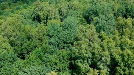 Flying above deciduous forest during windy day, aerial view