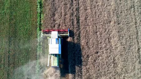 Aerial view of working harvester on wheat field, cutting and mulching. Stok Video