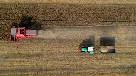 nakládané : Aerial view of working harvester on wheat field, cutting and mulching Dostupné videozáznamy