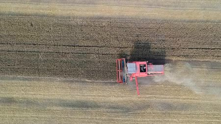Aerial view of working harvester on wheat field, cutting and mulching Stok Video
