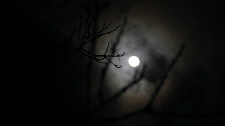 weerwolf : Boomtakken Obscure Full Moon