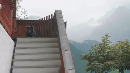 faház : Handheld 4k shot of cute black dog lying on the terrace of a private house or chalet.