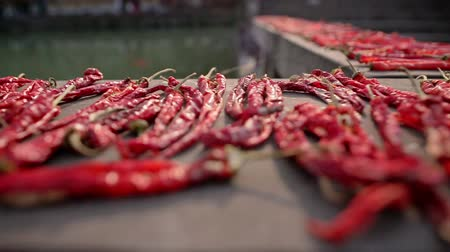 peperoni : Close up handheld shot of dried red hot chili peppers lying outdoors. Spicy food concept.