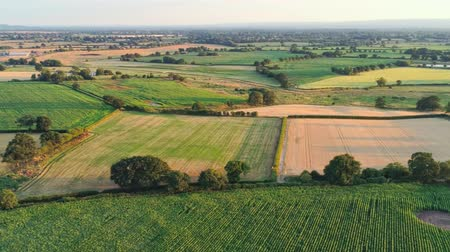 chester : Aerial view, panning move. Drone view on plains and yellow wheat fields during sunset. Stock Footage