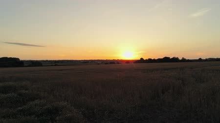 английский парк : Few short scenes of sunset on wheat field. Стоковые видеозаписи