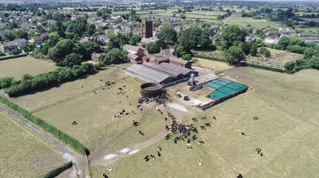 cow flies : Aerial view, pedestal rise move. Small settlement in cheshire, cow farm and old church with graveyard