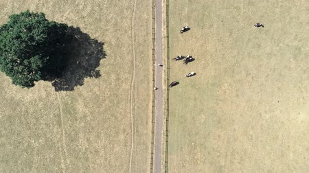 cow flies : Aerial static top down view. Single track dirt road two people and cows in field.