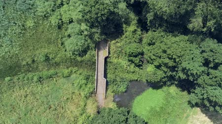 alanlar : Aerial view, fly down move. Drone over old small sandstone roman bridge and reed in overgrown english countryside. Stok Video