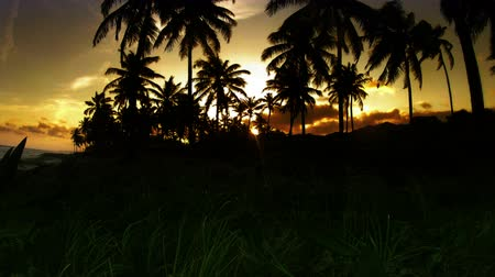 brazília : Slow Tilt Time-lapse of Golden Tropical Sunset through Coconut Trees Stock mozgókép