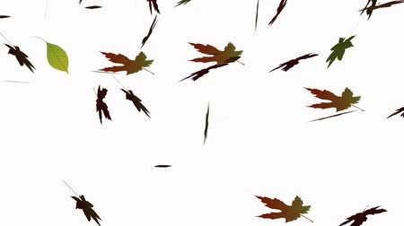 autumn : Animation of the autumn leaves falling