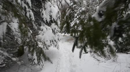 bezmotorové létání : Tracking shot through snowy pine trees (1)
