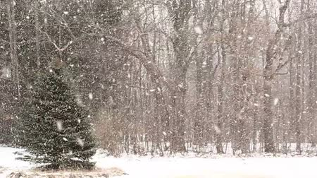 Heavy Snowfall with Large Snowflakes. Slow Motion.
