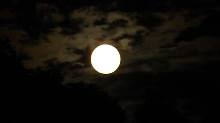 mehtap : Full Moon Rising Timelapse. Stok Video