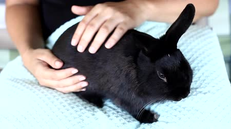 coelho : Woman holding and petting a black rabbit