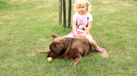 kobieta pies : Little girl playing and eating corn Brown Labrador retriever