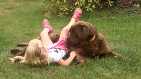 капелька : Little girl playing with a Brown Labrador retriever in spring Стоковые видеозаписи