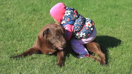 kobieta pies : Little girl playing with a Brown Labrador retriever in spring Wideo