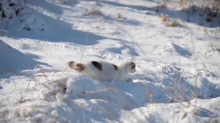 presa : White cat enjoy the snow