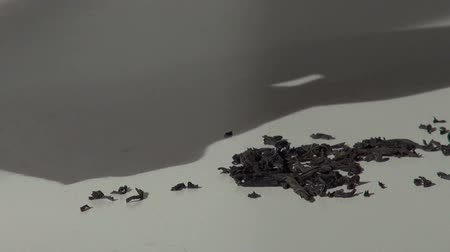 higiênico : scattered black tea is removed from the table with a napkin Stock Footage