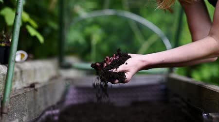 fértil : Slow motion of a woman  holding dark fertile soil in her hands laying on the garden. Vídeos