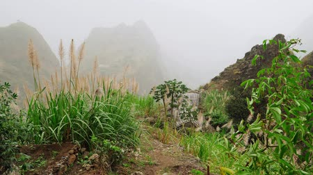 homály : Green landscape with mist flowing over huge mountain slopes. Lush vegatation of Santo Antao high plain. 4K footage Cape Verde Cabo Verde