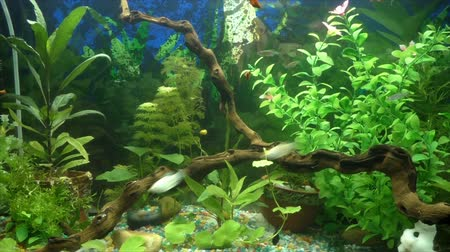 предъявитель : Aquarium with fish and mangrove snag