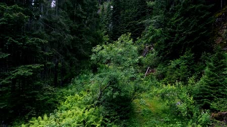 wood glade : Take-off of the Copter from a forest glade. Stock Footage