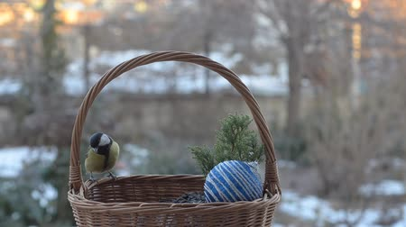подарок : Great tit pecking the seeds out of a wicker basket, Christmas.