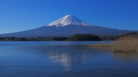 fuji : Mt. Fuji of Blue Sky from Oishi Park in Lake Kawaguchi 03062020 4k mp4 Stock Footage