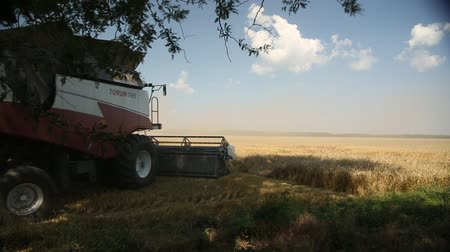 kombajn : the combine leaves in the field to collect wheat
