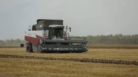 kombajn : harvester for harvesting grain crops goes on the field