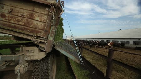 плотина : truck pours alfalfa from the body