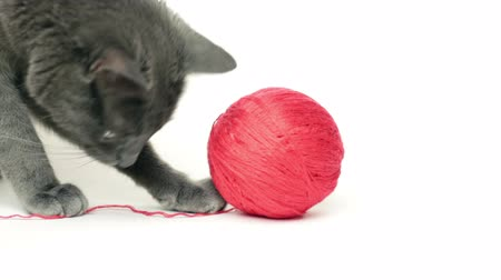 krátkosrstá : cat playing with red ball over white background