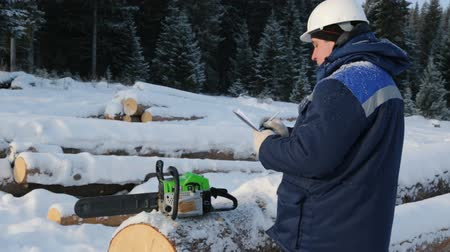 velo : Worker with tablet near pile of logs in the forest