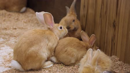 pétala : Domestic rabbits in zoo yard Stock Footage