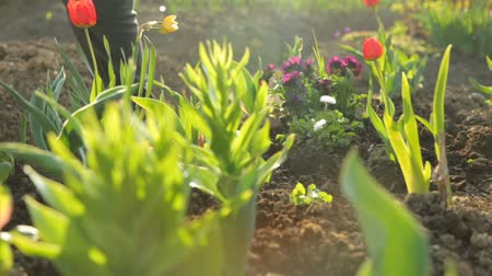 sazenice : Planting flowers in the garden