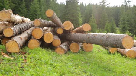 celý : Whole timber logs on green grass