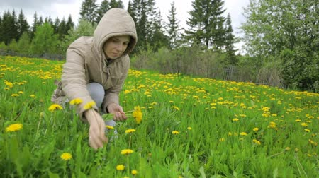 pampeliška : Woman picking dandelion on meadow