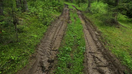 tread : Deep-rutted forest road in summer Stock Footage