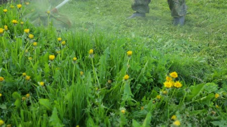 nejlon : Man is mowing on dandelion meadow