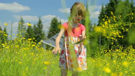 gather : Little girl picking flowers on meadow