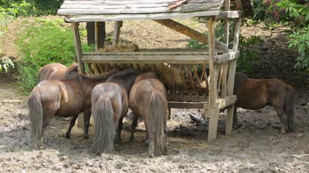 пони : Herd of pony in zoo